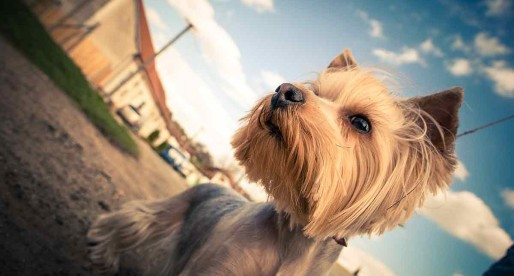 Work Benefits Rethink as Half of Millennials Would Like a Dog-Friendly Workplace