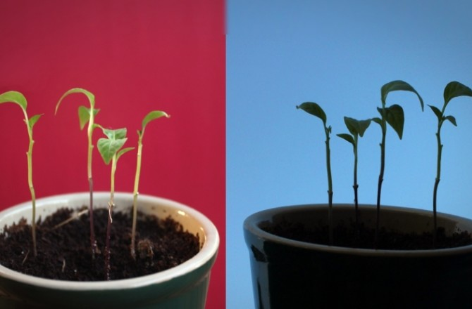 4 Definitive Ways to Grow Your Startup
