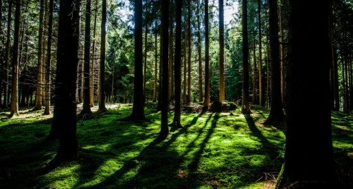 The Wood, The Trees and The Forrester Report